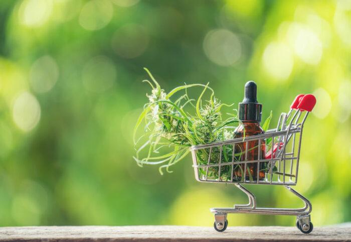CBD, un complément alimentaire légal en France et approuvé par l'OMS